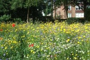 The new Wildflower Bed at Frinton