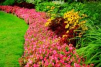 Photo of flower border with red and yellow flowers and lawn