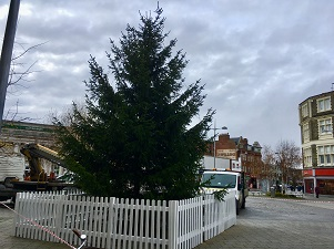 Clacton Christmas Tree ready to be decorated