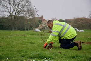A representative from GK Fencing planting trees at Rush Green Recreation Ground