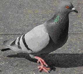 Pigeons and Seagulls | Tendring District Council
