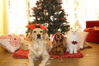 Dogs and a cat by a Christmas Tree