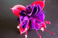 Close up photo of fuchsia flower